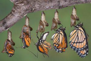 The Essence of Organisational Change